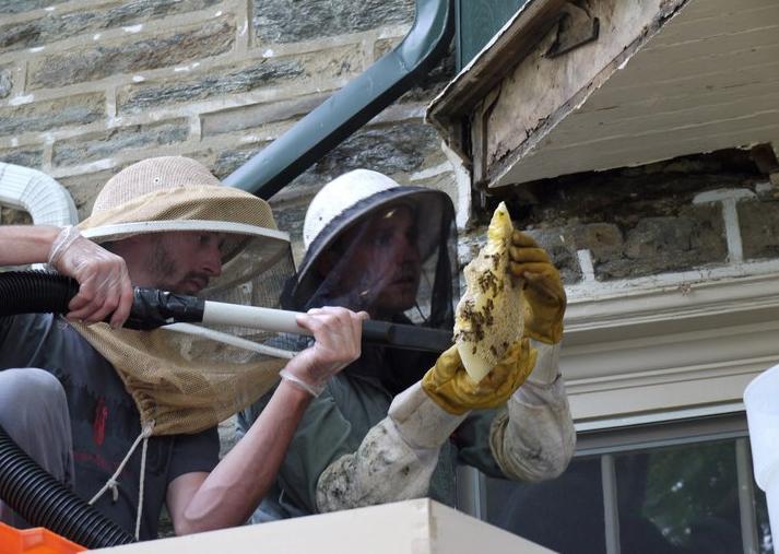 Todd beekeepers vacumming hive