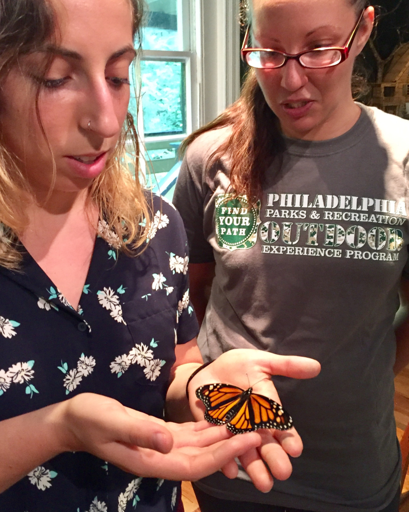Naturalists raise monarch butterflies