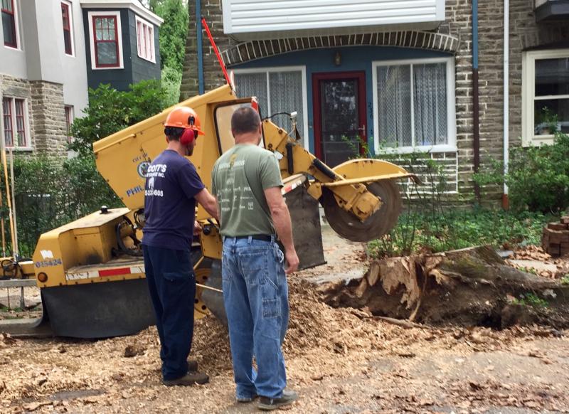 Workers grind tree stump